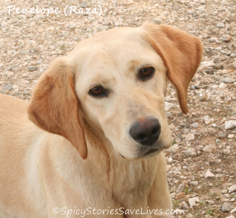 The patience of Penelope: a Greek street dog's odyssey from abandoned to adored (Part 1)