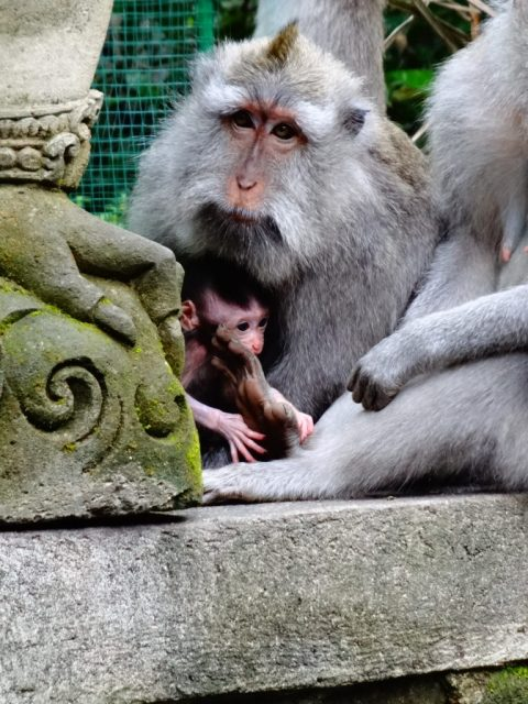Monkey Forest 6