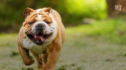 Small Of Low Maintenance Dog Breeds