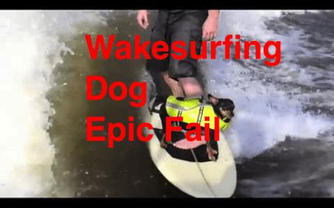 wakesurfing dog