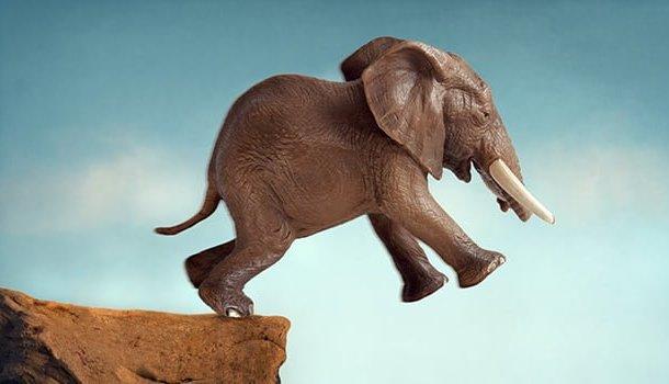 A adorável arte de tropeçar nos próprios pés e ser sutil como um elefante