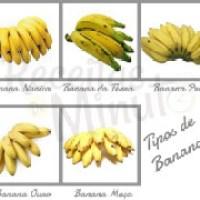 Tipos de banana com vários benefícios a saúde humana