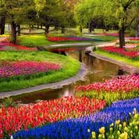 Campo de flores de diversos tipos
