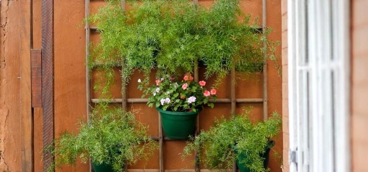 Jardim vertical para ambientes pequenos