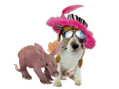 Beagle_Indy-Ardy