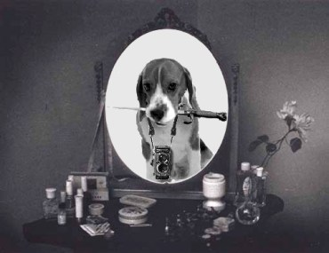 Beagle-Mirror-Gestalt