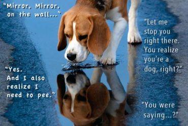 MirrorMirror_Beagle