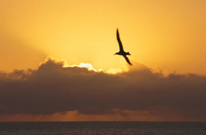 Bird-Flying-in-Sunset