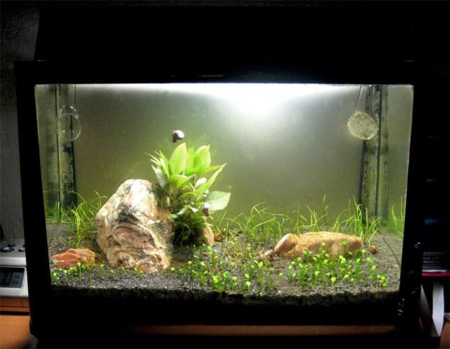 5 gallon fish tank background diy aquarium background for Fish for 2 5 gallon tank