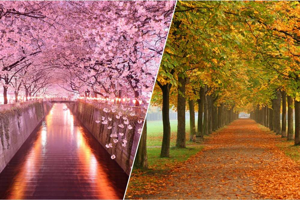 Spring and Autumn - The renewal of the elements of nature