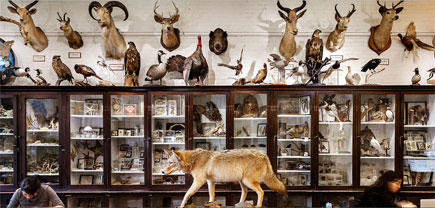 At RISD's Nature Lab (photo via Audubon magazine)
