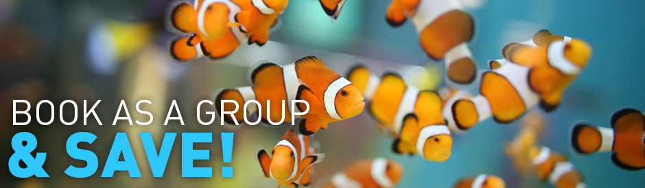 Groups-Deal