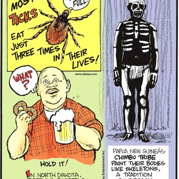 Most ticks eat just three times in their lives! -------------------- In North Dakota, beer and pretzels cannot be served at the same time! -------------------- Papua New Guinea's Chimbu tribe paint their bodies like skeletons, a tradition that began as a way to intimidate their enemies.