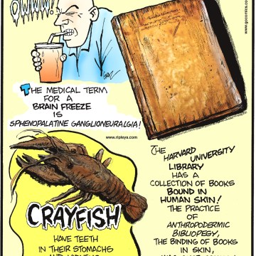 The medical term for a brain freeze is sphenopalatine ganglioneuralgia! -------------------- Crayfish have teeth in their stomachs and kidneys in their heads! -------------------- The Harvard University Library has a collection of books bound in human skin! The practice of anthropodermic bibliopegy, the binding of books in skin, was once common, originating in the 16th century.