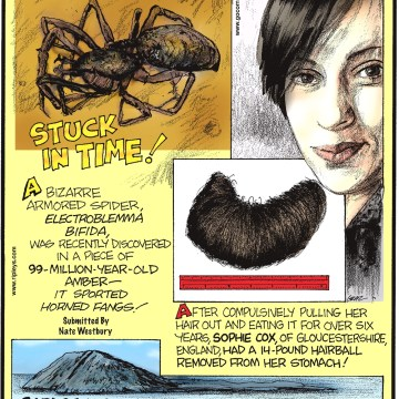A bizarre armored spider, Electroblemma bifida, was recently discovered in a piece of 99-million-year-old amber—it sported horned fangs! Submitted by Nate Westbury -------------------- After compulsively pulling her hair out and eating it for over six years, Sophie Cox, of Gloucestershire, England, had a 14-pound hairball removed from her stomach! -------------------- Bardsey Island, Wales, is home to just four living residents—but 20,000 graves!