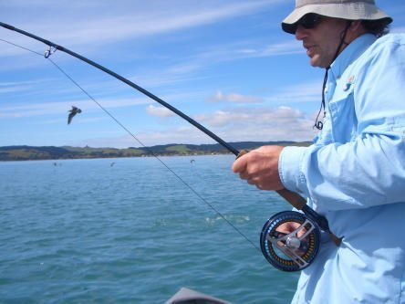 Loop Saltwater Fly Gear