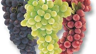 العنب فاكهة الجنة فوائد و صحة