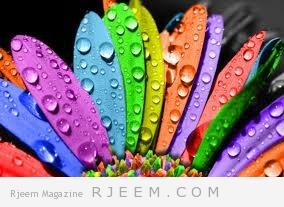 علاقة الجماع بالالوان