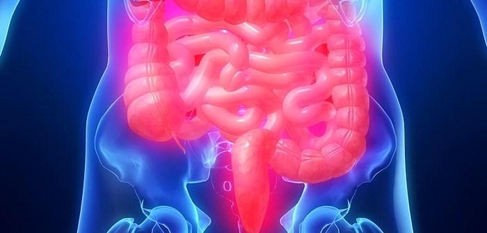 الدودة الشريطية  ماهي و ما اسبابها وكيفية علاجها بوصفة طبيعية