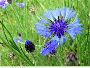 الهالات السوداء وكمادات مياه الزهور