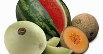 5 نصائح لاختيار  البطيخ