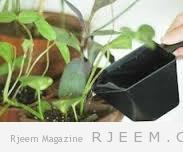 4 نصائح للحفاظ على صحة النباتات المنزلية