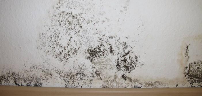 10 طرق للتخلص من الرطوبة في المنزل