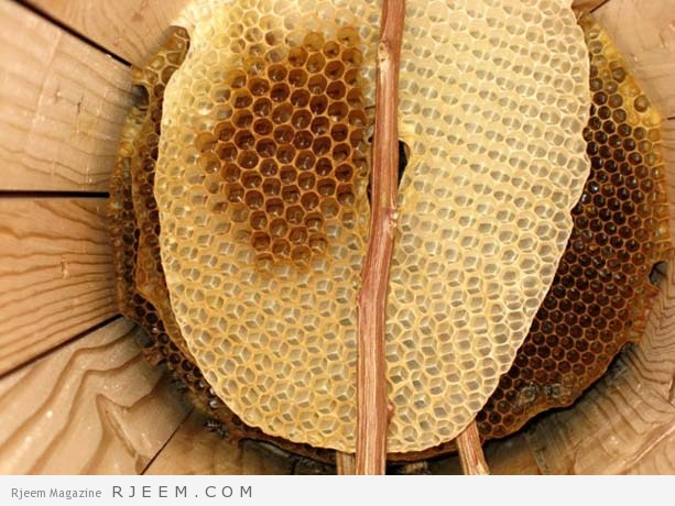 6 حقائق حول تناول شمع العسل