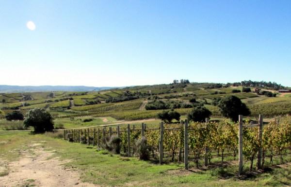new plantings at Garzón
