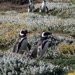 Happy Feet – Penguins and the Road to Ushuaia