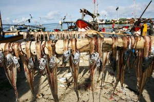 Fish drying on Ujung Genteng beach