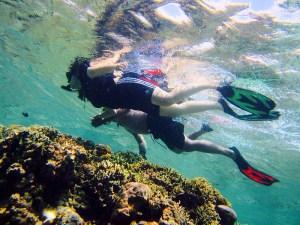 Menjangan island snorkelling, Bali, Indonesia