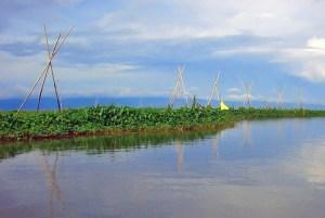 Lake Tempe garden, Sulawesi, Indonesia