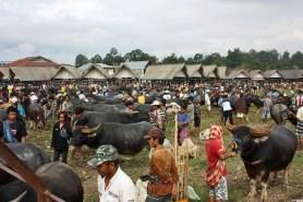 Pasar Bolu (Bull Market) in Tana Toraja, Sulawesi