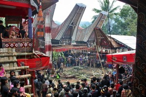An elaborate funeral for a Toraja nobleman.