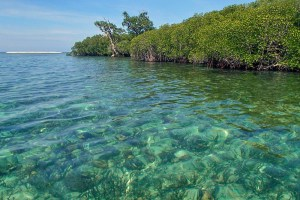 Crystal clear waters over the sea grass beds of Gili Lawang, Lombok
