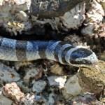 Snake Island, Sumbawa