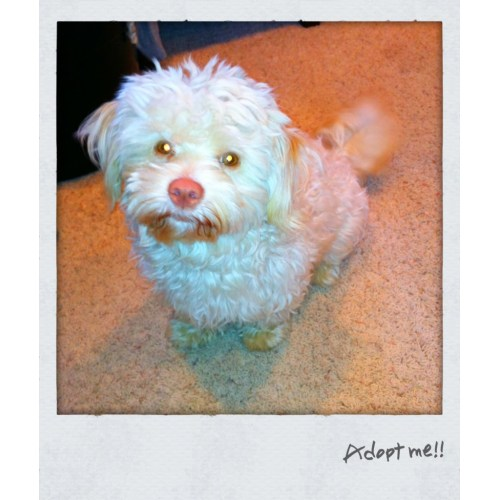 Medium Crop Of Toto The Dog