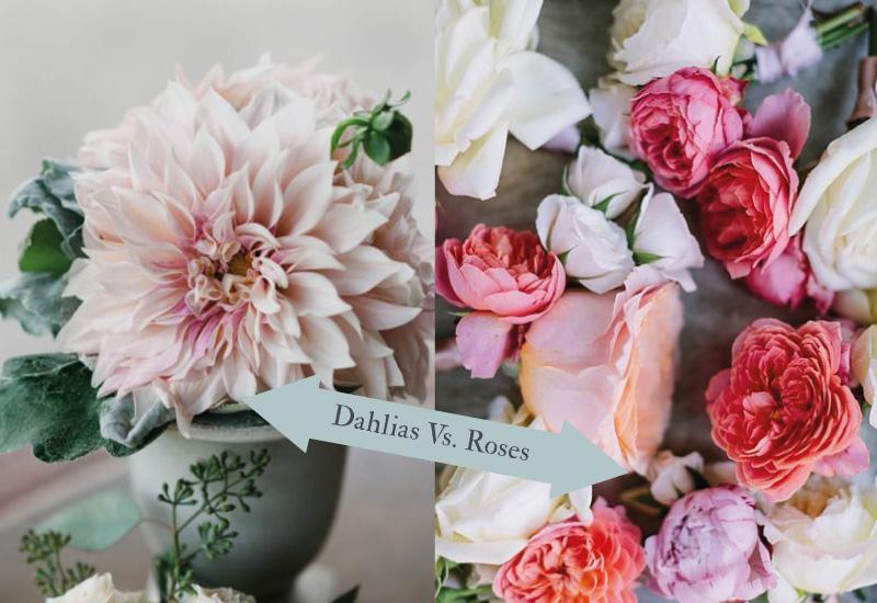 dahlia v rose Friday Face Off…Dahlias vs. Roses