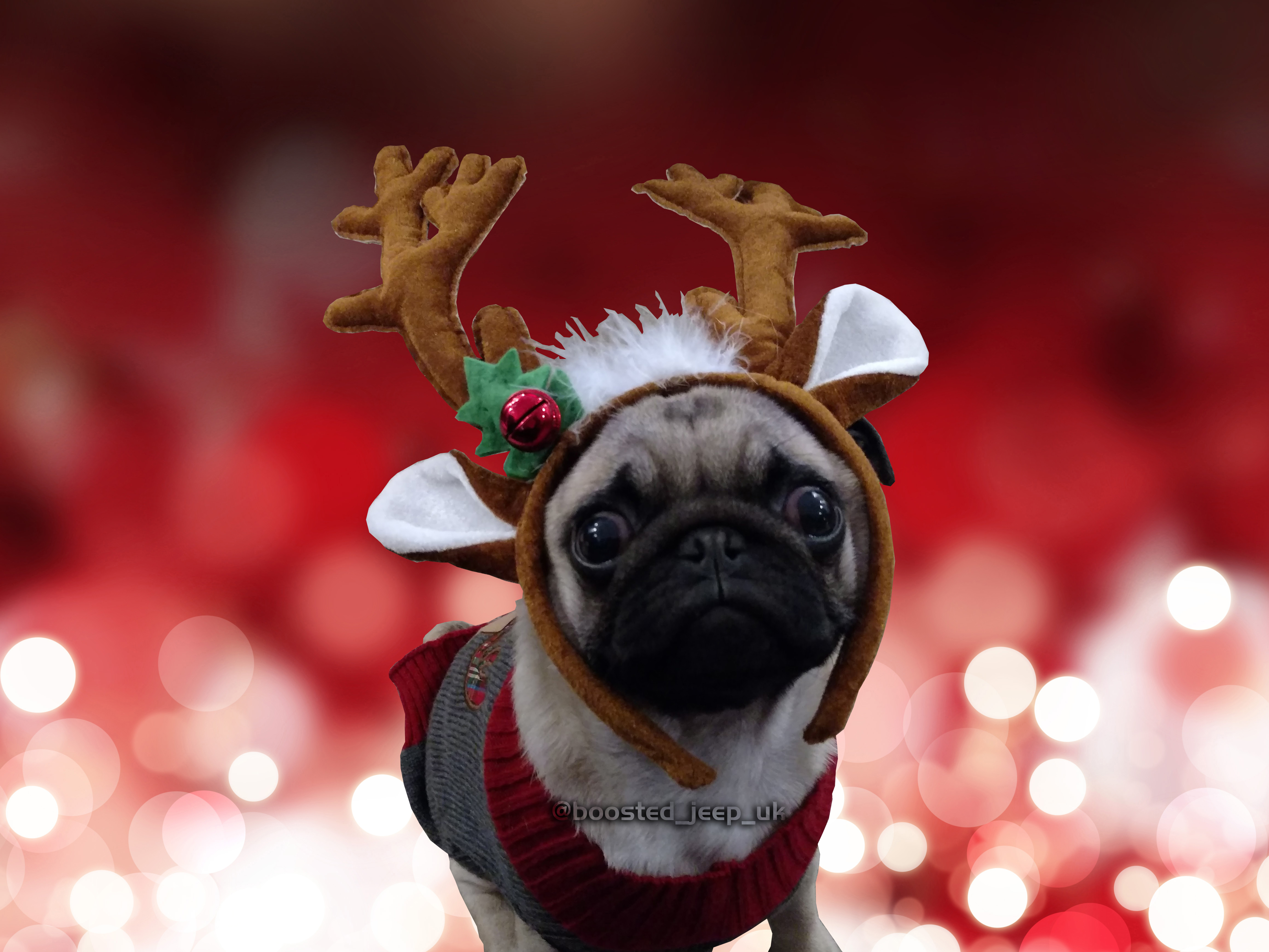 Dugg the Pug does Xmas