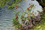 gosausee_2015_58