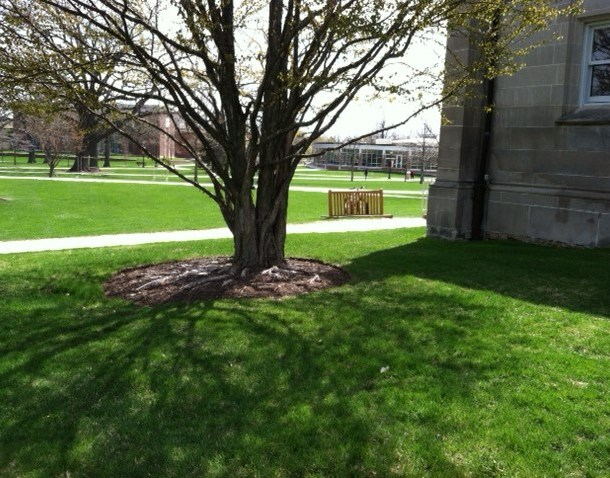 The Interfaith Tree
