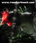 Christmas(RH)