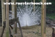 IMG_3531(Web)(RH)