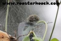 RHFishingSpider1(Web)(RH)