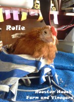 Rolie3(RH)(Web)