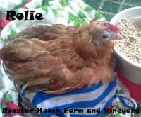 Rolie4(RH)(Web)