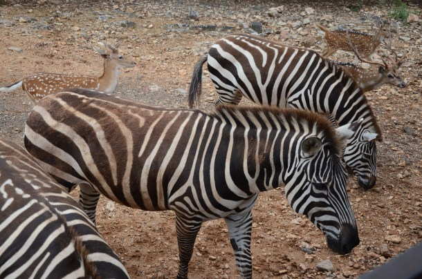 Exotic Resort Zoo | Roots and Wings Family Travel