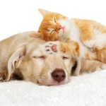 50880324 - kitten and puppy sleeping