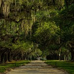 oak alley at Boone Hall Plantation
